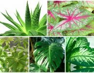 20 plants to be wary about