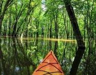 Parc de la Rivière-des-Mille-Îles : en kayak dans les bayous