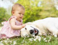 Animaux domestiques et bébé