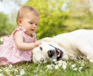 Pets and baby