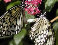 Papillons en liberté 2011