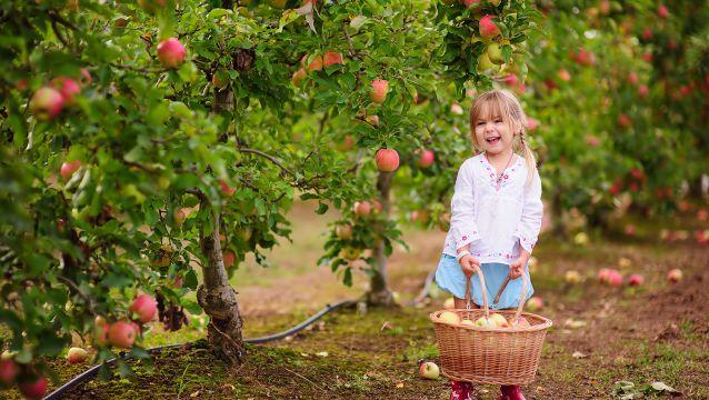 Nos 15 adresses préférées pour aller aux pommes