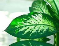 Vos plantes sont-elles un danger pour vos enfants?