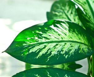 Are your plants poisonous?