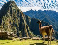 3 bonnes raisons de voyager au Pérou en famille