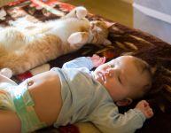 Présenter bébé au chat de la famille