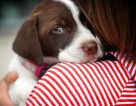 Adopter le bon chien pour notre famille