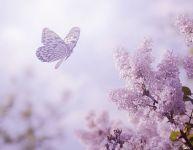 L'extraordinaire initiative des papillons mauves
