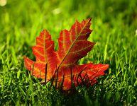 5 bricolages d'automne