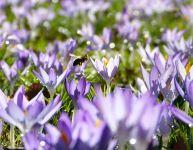 Allergies saisonnières : les prévenir et les apaiser